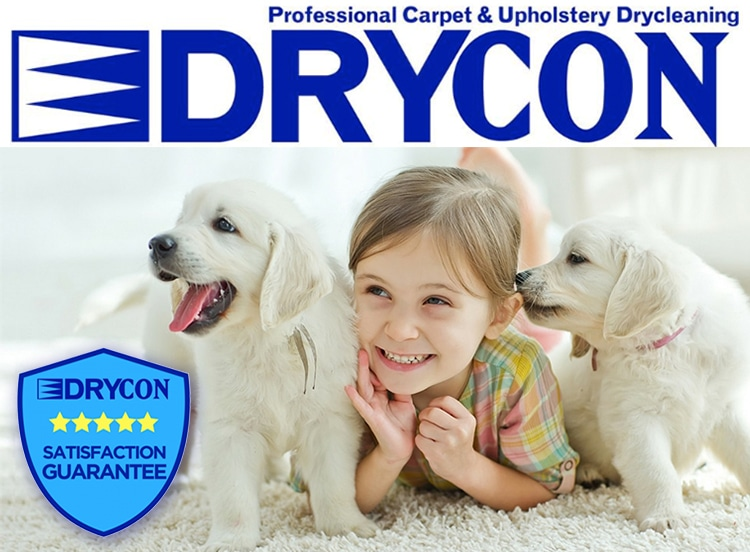 Carpet Cleaning Lebanon Tn Upholstery Carpet Cleaners Mount Juliet